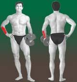 """A imagem """"http://muscul.az.free.fr/pt/AMavbPo.jpg"""" contém erros e não pode ser exibida."""
