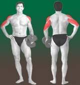 AMdevass Os melhores exercícios da musculação   Desenvolvimento, por trás.