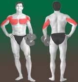 AMdvcou Os melhores exercícios da musculação   Supino