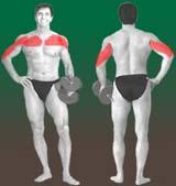 AMdvinc Os melhores exercícios da musculação   Supino